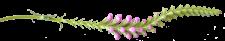 quick-flower-divider2